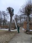 Baumschnitt_französicher_Barockgarten_1